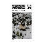 Snow Images, Snow Cat Postage