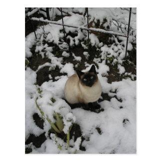 Snow Images Snow Cat Postcard
