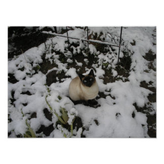 Snow Images, Snow Cat Poster