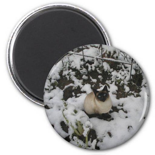 Snow Images, Snow Cat Refrigerator Magnet