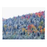 Snow in Autumn Postcard