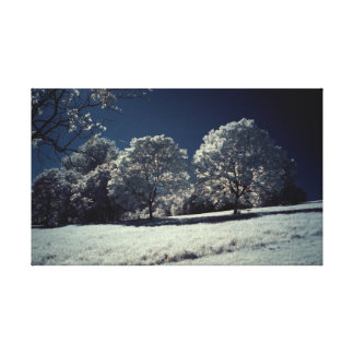 Snow in Summer Stretched Canvas Print