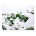Snow in the Desert 2 Postcard