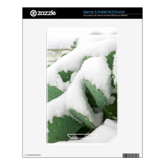 Snow in the Desert NOOK Color Decal