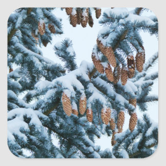 Snow in the Pines Stickers