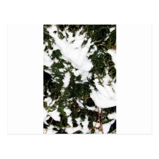 snow.jpg postcards