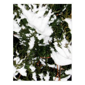 snow.jpg postcard