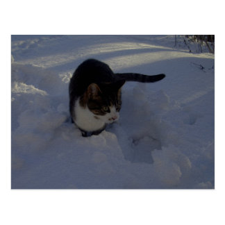 Snow Kitten Postcards