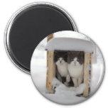 Snow Kittens Refrigerator Magnets