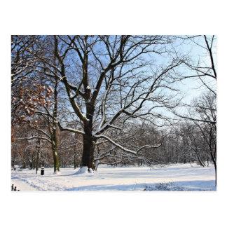 Snow land postcard