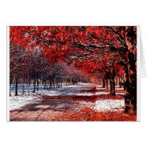 Snow & Leaves