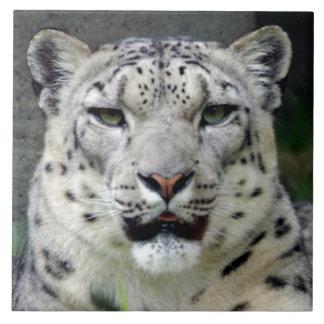 snow-leopard10x10 azulejo cuadrado grande