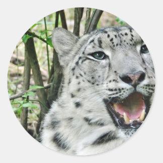 Snow Leopard 2 Classic Round Sticker