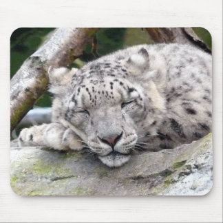 Snow Leopard - beautiful! Mouse Pad