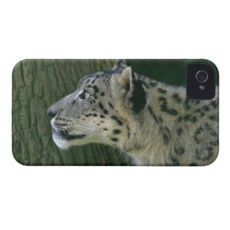 Snow leopard beautiful photo blackberry bold case