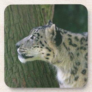 Snow leopard beautiful photo coaster