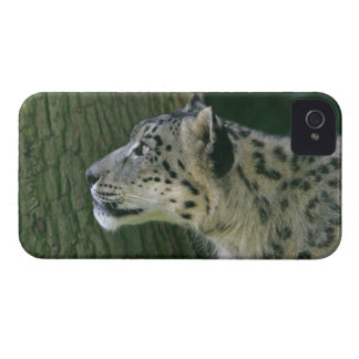 Snow leopard beautiful photo iphone 4 case mate