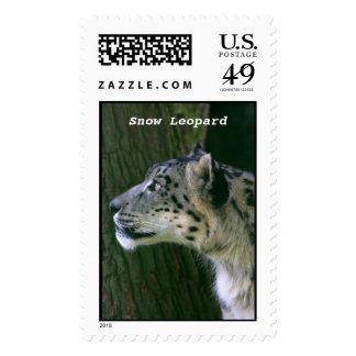 Snow leopard beautiful photo postage stamp