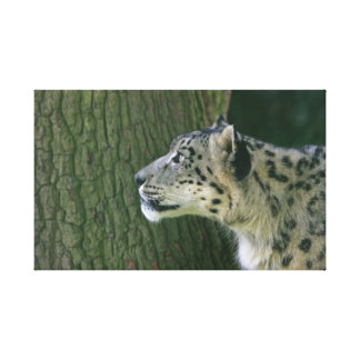 Snow Leopard beautiful photo wrapped canvas print