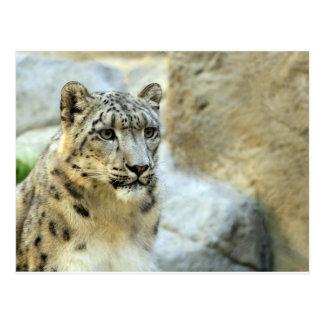 Snow Leopard Big Cat Design Postcard