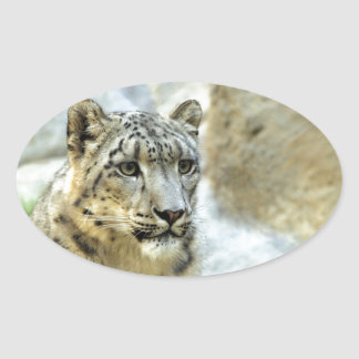 Snow Leopard Big Cat Design Oval Sticker