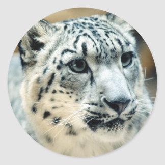 Snow Leopard Close-Up Classic Round Sticker