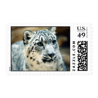 Snow Leopard Close-Up Postage Stamps
