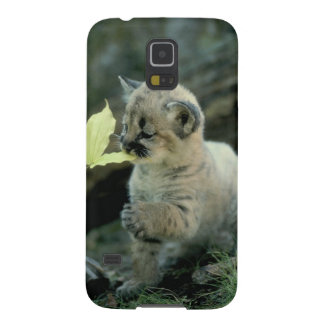 Snow Leopard Cub Cases For Galaxy S5