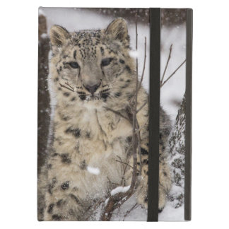 Snow Leopard Cub Cover For iPad Air
