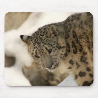 Snow Leopard Cub Mouse Pad