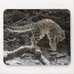 Snow Leopard Cub Pounce Mouse Pad