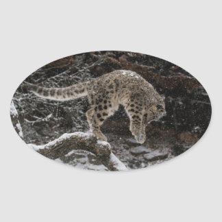 Snow Leopard Cub Pounce Oval Sticker