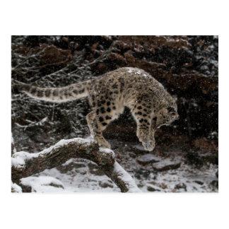 Snow Leopard Cub Pounce Postcard