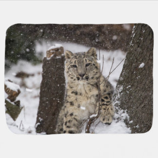 Snow Leopard Cub Receiving Blanket