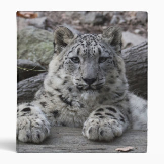 Snow Leopard Cub Sitting 3 Ring Binder