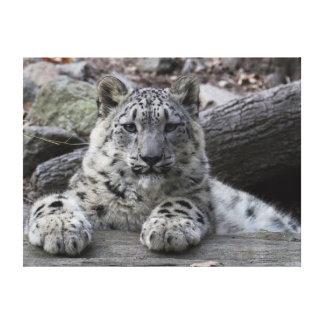 Snow Leopard Cub Sitting Canvas Print