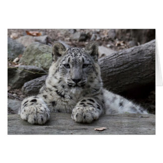 Snow Leopard Cub Sitting Card