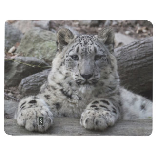Snow Leopard Cub Sitting Journal