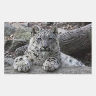 Snow Leopard Cub Sitting Rectangular Sticker