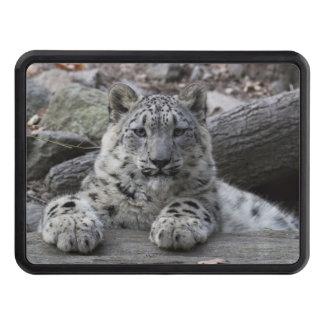 Snow Leopard Cub Sitting Trailer Hitch Cover