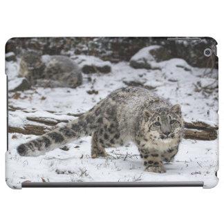 Snow Leopard Cub Stalking Birds iPad Air Cover
