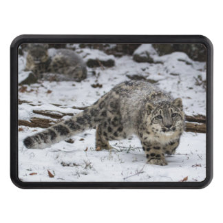 Snow Leopard Cub Stalking Birds Tow Hitch Cover
