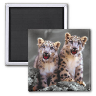Snow Leopard Cubs 2 Inch Square Magnet