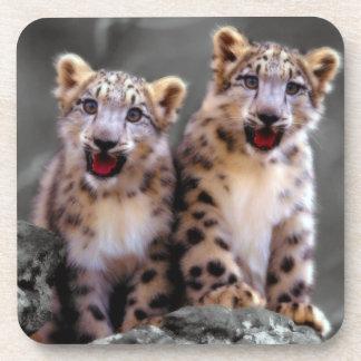 Snow Leopard Cubs Coasters