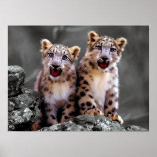 Snow Leopard Cubs Print