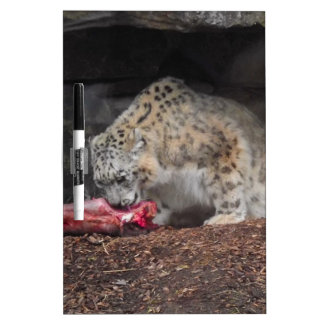 Snow Leopard Eating His Meat Colorful Photo Dry Erase Board