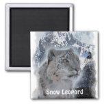 SNOW LEOPARD Endangered Species of Big Cat Refrigerator Magnet