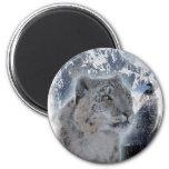 SNOW LEOPARD Endangered Species of Big Cat Magnets