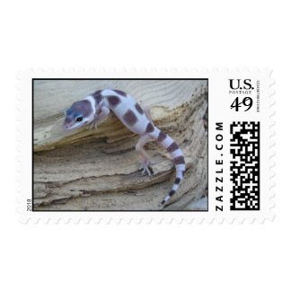 Snow Leopard Gecko on Wood Postage Stamp