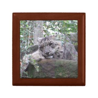 Snow Leopard Gift Box